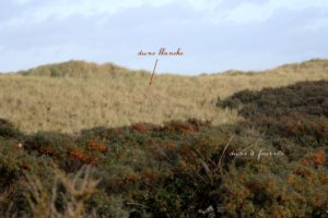Dune blanche et dune à fourrés.
