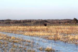 Prairies humides.
