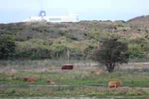 La réserve, un ferry passe au loin.