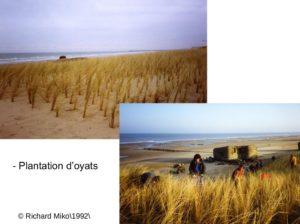 Plantations d'oyats, 1992, photos Richard Mikolajczak.